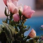 G pool flowers