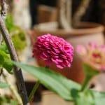 flowers october