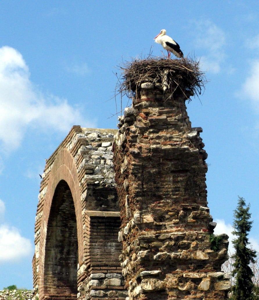 storks in selcuk