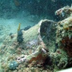 Amphora buried in the reef