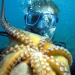 Octopus upside down