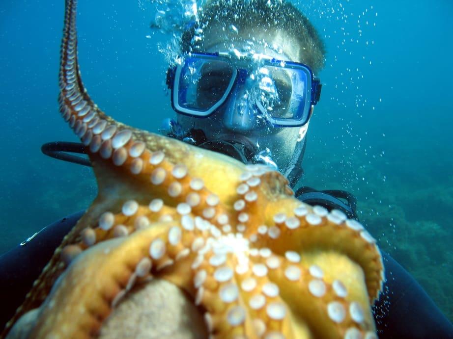 Octopus upside down
