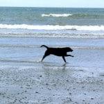 Shadow racing along the beach at Abermawr