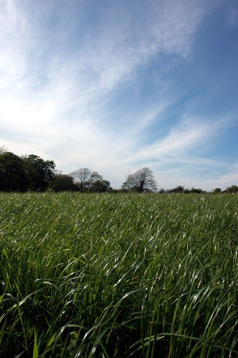 Home meadow
