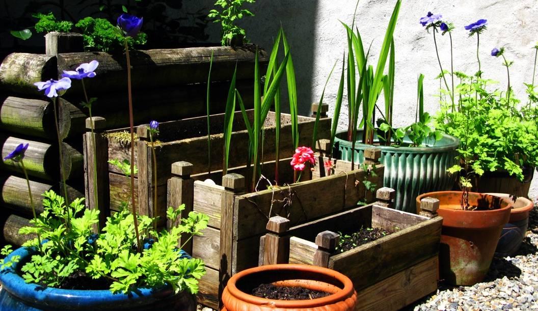 June pots
