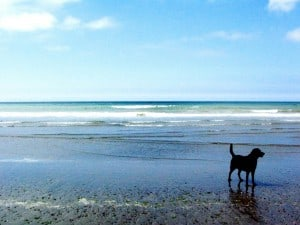 dog walking abermawr pembrokeshire