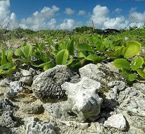 coral-rubble