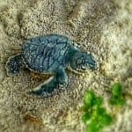 My turtle hatchling