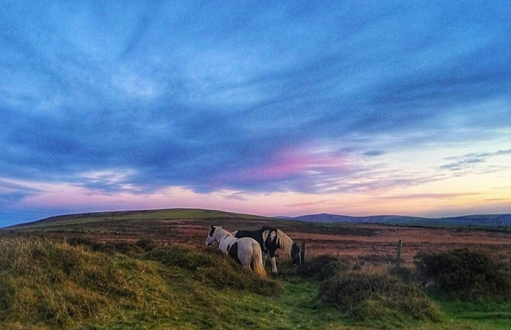 wild ponies pembrokeshire