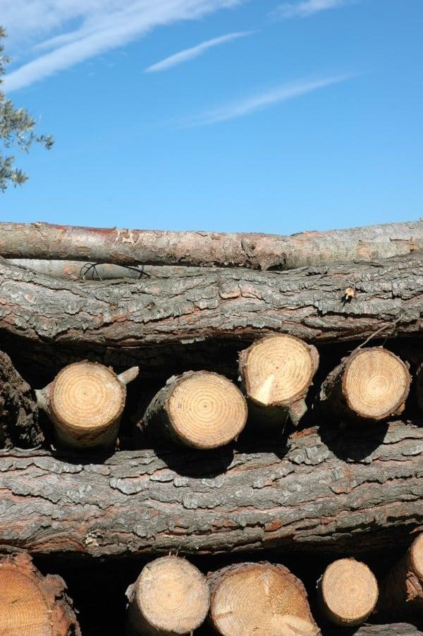 January wood pile
