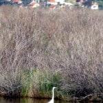 wading birds at pamucak