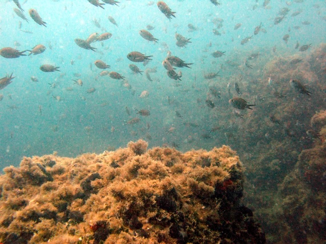 reef fish april