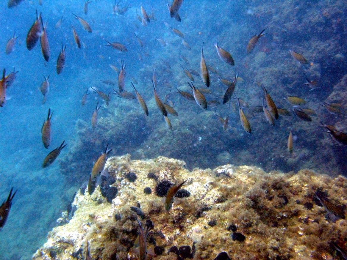 reef fish pamucak reef