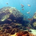 Ozel reef dive