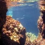 Kamil Cavern fish