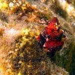 Hermit crab at Kamil Cavern